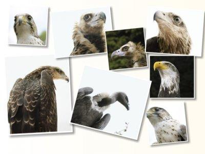 Картинки с хищными птицами (9 картинок)